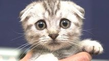 Gatos Lindos Un Lindo Gato Vídeos Compilación De 2015