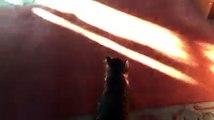 Un imam ouvre les portes de sa mosquée pour accueillir les chats errants