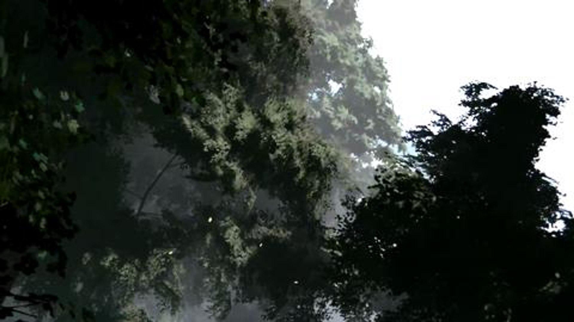 Unreal engine 4 bosque