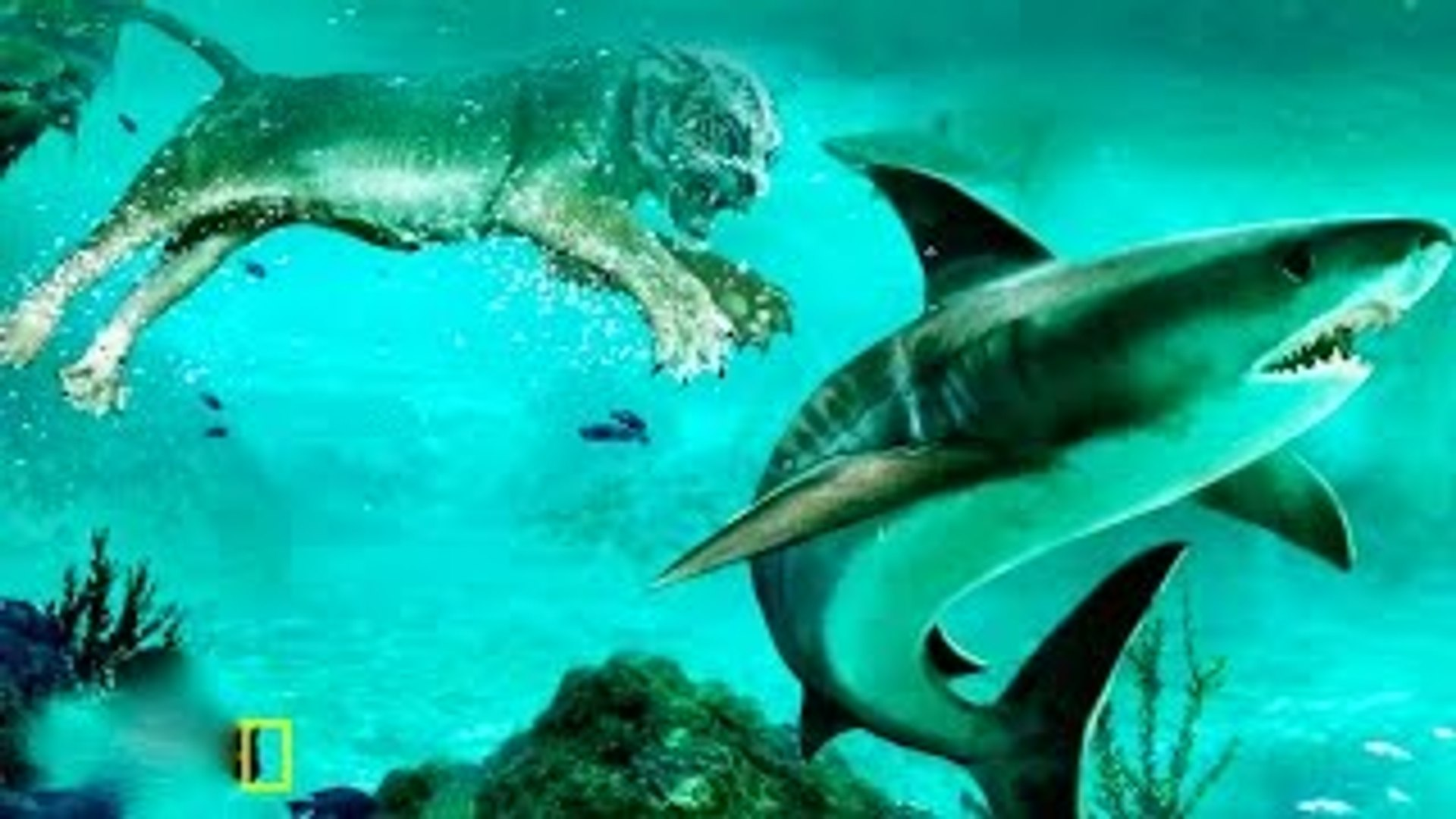 Animal Documentary National Geographic BIG CATS HUNTING UNDER WATER???