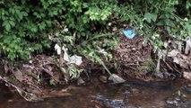 Asturias ecologistas responden a denuncia de pescadores por los excrementos de aves