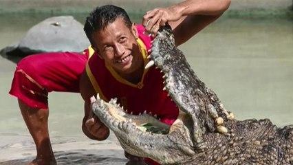 Una granja de 100.000 cocodrilos, atracción turística en Tailandia