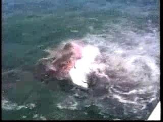 Attaque-requin