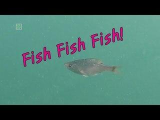Fish Fish Fish / Namhae in the Gopro