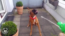 Crazy, Silly Pets Spazz Out    Hilarious Pet Video Comp