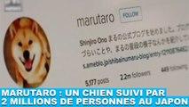 Marutaro : Un chien suivi par 2 millions de personnes au Japon ! Découvrez-le dans la minute chien #104