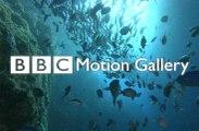 belgesel - BBC - İZ SÜRÜCÜLER