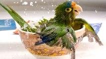 COMPILACION DE MASCOTAS GRACIOSAS!!!! Mascotas graciosas y divertidas , videos chistosos 2
