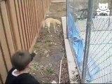 Pet Cat Saves Boy from Two Vicious GATORS -Cat vs Gator (original)