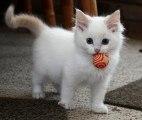 Quand un chat rapporte la balle, se prend-t-il pour un chien ?