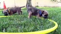 Popular Border Terrier & Terrier videos