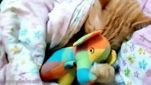 Cats Hugging Toys Compilation