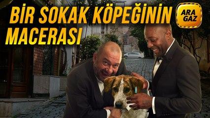 Ara Gaz Radyo Tiyatrosu: Bir Sokak Köpeğinin Macerası