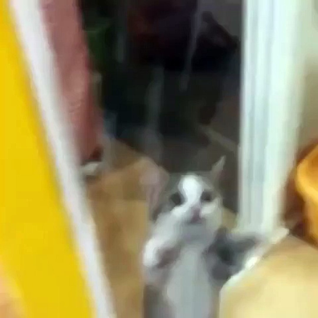 Funny Cats Compilation [Most See] Funny Cat Videos Ever Part 1 cat 2016 cat funy amazing cat