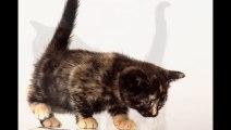 Süsse Babykatzen. Fotoshooting. Funny Cat. Foto. Photo