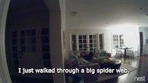 Un papa terrifié par une toile d'araignée fait rire toute sa famille - Chochotte!!!