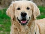 Terk Edilen Köpek, Sahibinin Peşinden Kilometrelerce Koştu