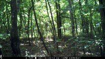 21st trail cam bigfoot