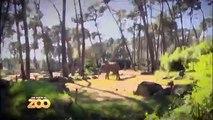 Petits rapaces, tigre et fourmilier - Ep4 S1 - #SaisonAuZoo