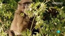 El reino del desierto de Namibia documentales de animales