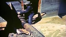National geographic - Salmon Documentary - BBC wildlife animal documentary