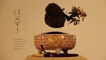 Des entrepreneurs japonais créent un bonsaï volant