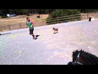 Questo Pony Ha 3 Giorni Di Vita: Guardate Cosa Fa Quando Il Suo Amico Inizia A Correre...
