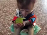 My adorable little cute monkey enjoying her fruits