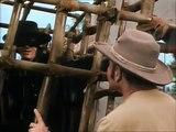 Zorro échappe au piège partie 2