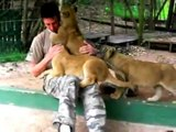 Lion cubs give Worker hugs and kisses on his last day Must watch cute
