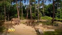 Lions blancs, serpent et frayeur - Ep7 S2 - #SaisonAuZoo