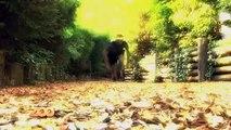 Lionceau, otaries et bébé chouette - Ep21 S4 - #SaisonAuZoo