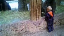 Un bébé gorille joue à cache-cache avec un enfant humain - Adorable