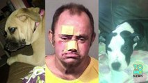 Man saves dogs: Pet owner charged for throwing ax through window to save dogs from blaze -
