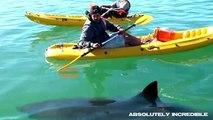 When SHARKS ATTACK! Multiple REAL SHARK ATTACKS caught on camera! (AMAZING WILDLIFE video!)