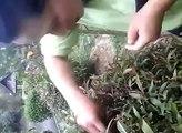 Une jardinière affamée trouve un nid d'oiseau... Et mange les oisillons!