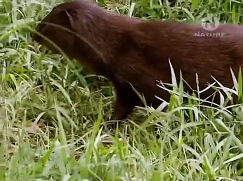 Очень интересный фильм про животных!!! Залив хищников. Документальный фильм