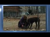 Winter's Bone - Trailer