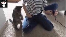 Cats -Funny Cats - Funny Cat Videos - Funny Cats Compilation - Funny Animal [#12]