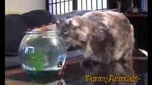 funny clips-funniest videos-best funny-funny site-short clips-comedy clips A Funny Cat Videos Compilation 2016