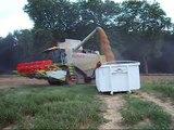 Moisson des blés avec Lexion 560 Montana