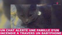 Un chat alerte une famille d'un incendie à travers un babyphone ! L'histoire dans la minute chat #115Un chat alerte une famille d'un incendie à travers un babyphone ! L'histoire dans la minute chat #115