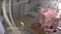 Complément d'enquête –  La guerre de la viande reportage enquete  28 janvier 2016 HD