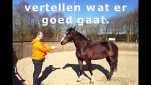 Clickertraining met paarden Waarom clickeren voor paarden zo goed werkt