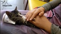 G irl make a cat sleeping with a ridicules way #funnycats