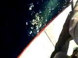Fethiye'de Köpek Balığı Yakalandı