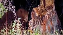 Doğanın Mühendisleri Hayvanların Harikaları Türkçe Belgesel