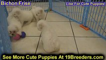puppies for sale in bc canada - video dailymotion