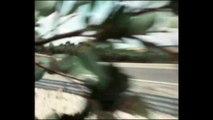 BMW Milestone 3 - Driving Video Art Car Frank Stella BMW 3.0 CSL