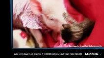 Avec leurs câlins, ce chaton et ce petit cochon vont vous faire fondre (Vidéo)